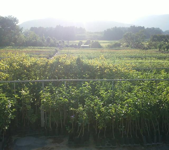 萩原園の苗木農場