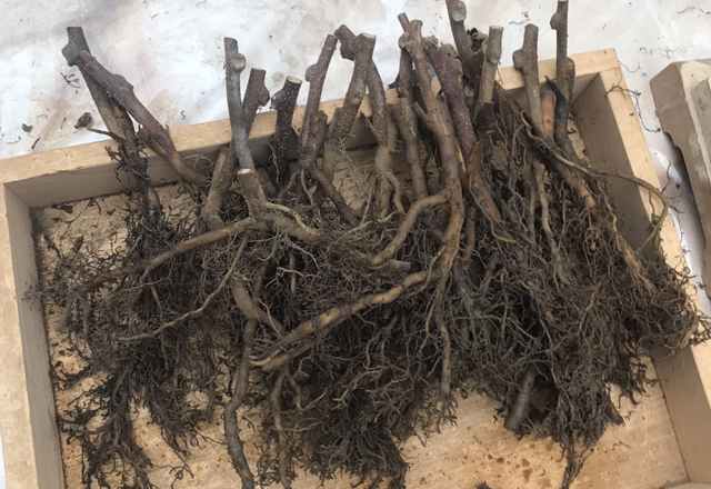 苗木の通販。生産・栽培をしています。